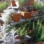 Come coltivare le erbe aromatiche? Sul balcone!